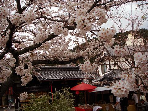 2007sakura.jpg