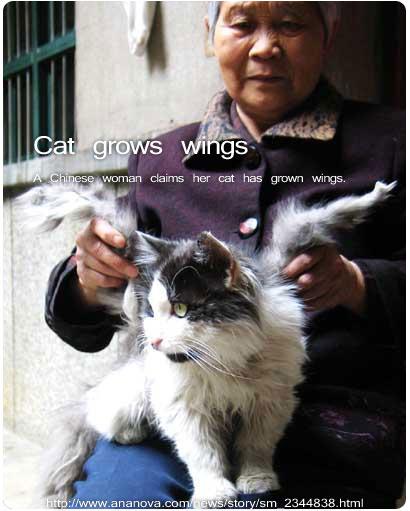 """翼の生えた猫"""""""