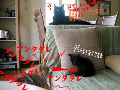 IMG_4563.jpg