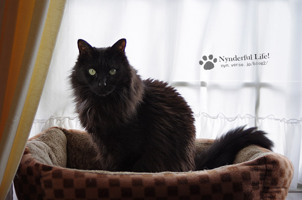 男前な猫、毘沙門