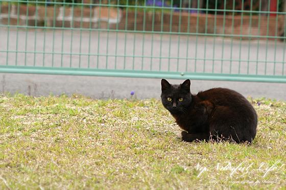 しなやかな黒猫