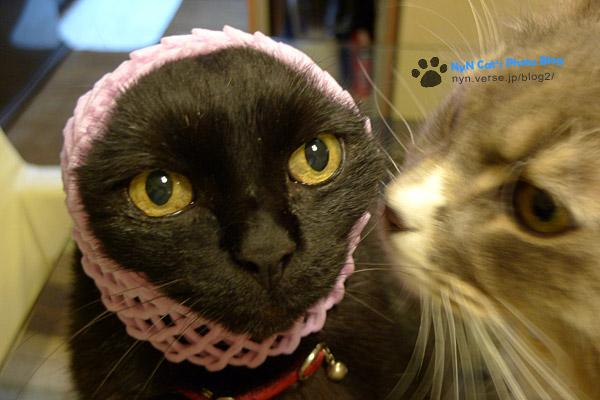 猫の耳打ち?