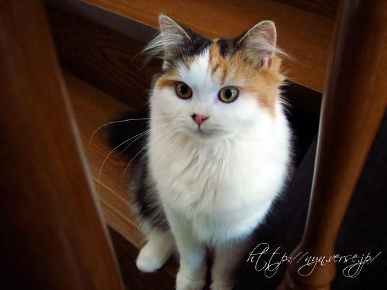 猫の通信簿:やればできる子