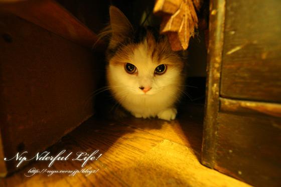 広角で覗いた猫~椛~