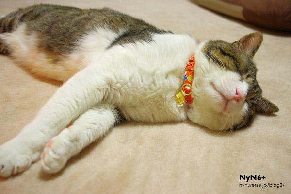 サバオ、猫の神様系。