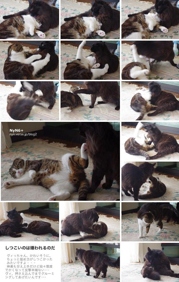仲良し猫同士のグルーミング