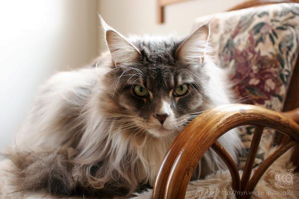 いらんことしぃ。の異名を持つ猫