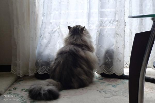 たそがれる猫