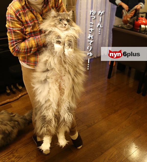 ながーい猫。