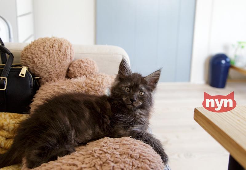 パルシファルという名の黒煙の猫。