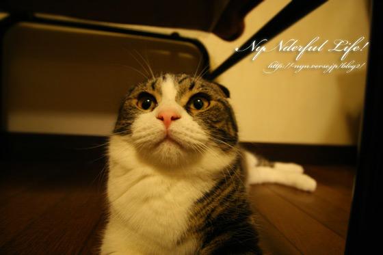 広角で覗いた猫~神楽~