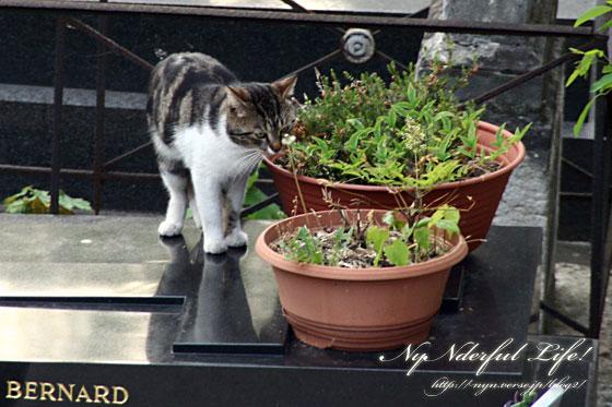 モンマルトル墓地の猫たち