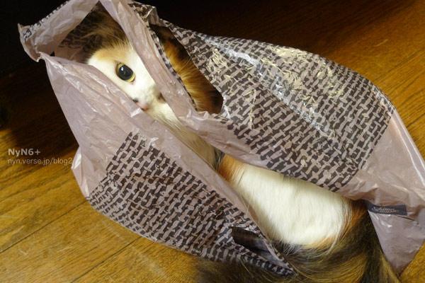 horror cat