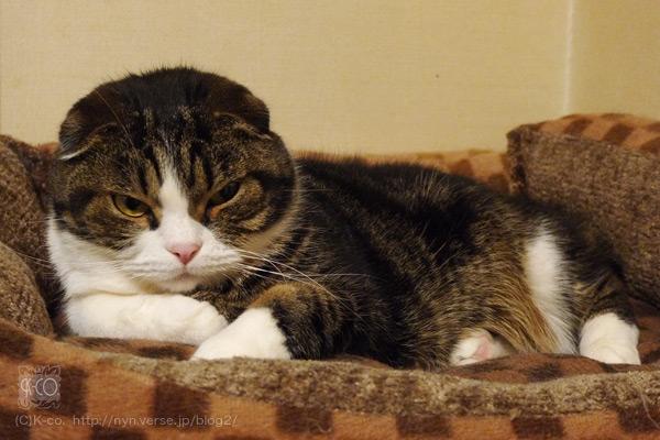 猫って表情豊かなんです