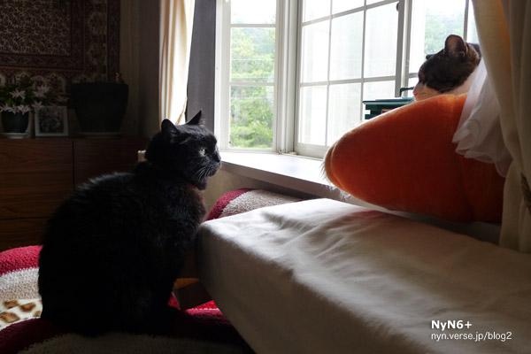 レオ meets サバオ と お家探し中な黒猫。